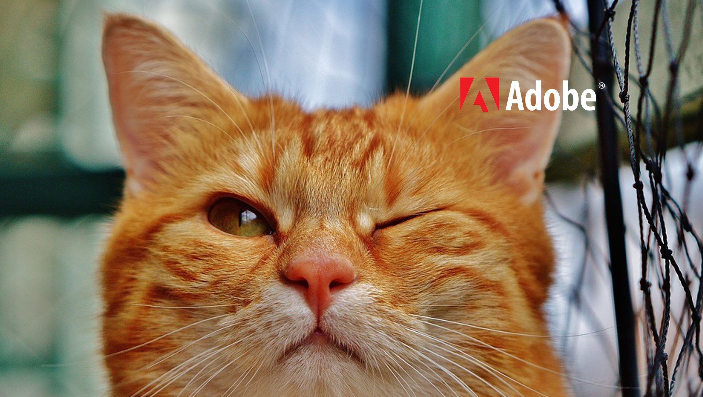 Adobe Advertising Cloud